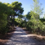 Pine Forest & Nature