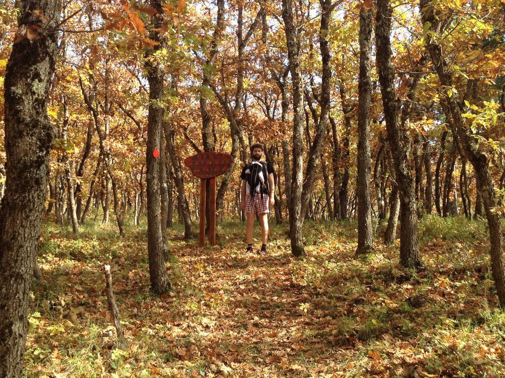 mogostos forest