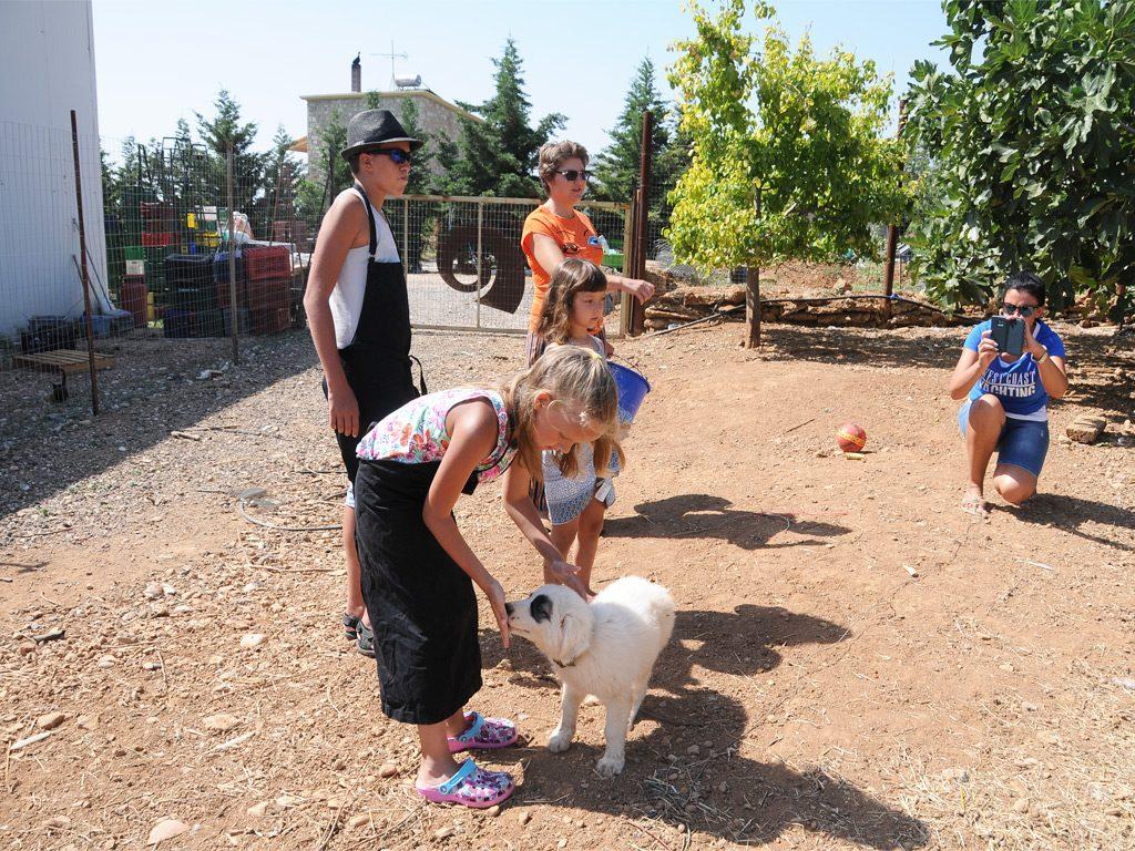 Agrotourism at Drupes, Corinthia
